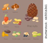 piles of different nuts... | Shutterstock .eps vector #665016361