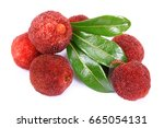 red bayberry arbutus  on the... | Shutterstock . vector #665054131