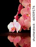 Pink orchid on night background - stock photo