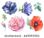 set flowers blue anemones  rose ... | Shutterstock . vector #665092501