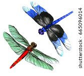 Insect Dragonfly Set In A...