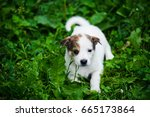 Stock photo cute puppy on green grass 665173864
