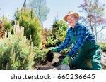 senior gardener digging in a... | Shutterstock . vector #665236645