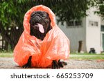 funny pug dog wearing orange... | Shutterstock . vector #665253709