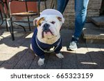 st petersburg  russia   june 17 ... | Shutterstock . vector #665323159