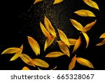 Stock photo sunflower petals with pollen isolated on black background 665328067