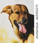 different house dogs running... | Shutterstock . vector #665352271