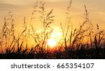 grass in the sunrise | Shutterstock . vector #665354107