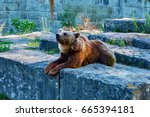 Small photo of Switzerland. The city of Bern. June 11, 2017. Bear in the city of Bern. The symbol of the city.