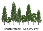 trees in a row isolated on...   Shutterstock . vector #665397199