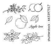 apple tree black and white... | Shutterstock .eps vector #665397517