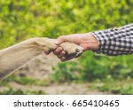 A man holds a dog's paw in his...