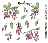 hand drawn painted set of... | Shutterstock . vector #665421919