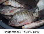 Nile Tilapia Fish At Fresh...