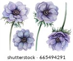 watercolor set of anemones ... | Shutterstock . vector #665494291