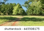 autumn forest. forest trail in... | Shutterstock . vector #665508175