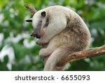 tamandua southern anteater | Shutterstock . vector #6655093