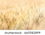 agricultural background with... | Shutterstock . vector #665582899