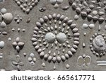 intricate shell designs and... | Shutterstock . vector #665617771