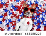 jack russell dog on... | Shutterstock . vector #665655229