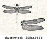 vector illustration. dragonfly... | Shutterstock .eps vector #665669665