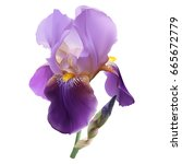 Iris Flower. Hand Drawn Vector...