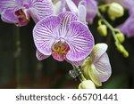 orchids | Shutterstock . vector #665701441