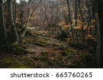 The Dense Forest In The...