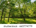 sunny forest | Shutterstock . vector #665774779