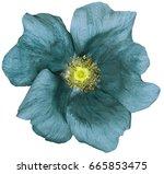 flower turquoise on a white... | Shutterstock . vector #665853475