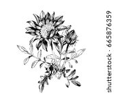 hand drawn botanical art... | Shutterstock .eps vector #665876359