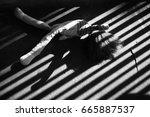 abandoned | Shutterstock . vector #665887537