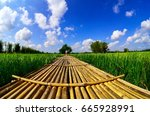 Bamboo Path In The Rice Field