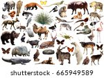 collection of different birds ... | Shutterstock . vector #665949589