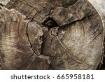 tree rings are counted to... | Shutterstock . vector #665958181
