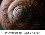 Snail Shell Texture.shell Of...