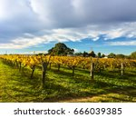 Vineyards In Swan Valley  Near...