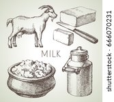 hand drawn sketch milk products ... | Shutterstock .eps vector #666070231