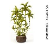 3d digital render of  roystonea ... | Shutterstock . vector #666081721