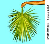 minimal. hand holds a palm leaf.... | Shutterstock . vector #666111265