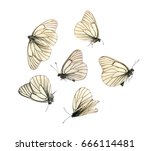 many aporia crataegi...   Shutterstock . vector #666114481