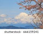 sakura cherry blossom with... | Shutterstock . vector #666159241