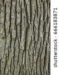 Old Wood Tree Texture...