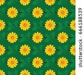golden button flowers vector... | Shutterstock .eps vector #666188539