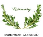 rosemary frame element forms a... | Shutterstock . vector #666238987