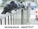 Doves Of The City On The Fence...