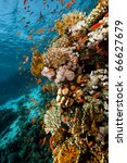 fish. coral and ocean. | Shutterstock . vector #66627679