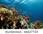 fish. coral and ocean. | Shutterstock . vector #66627733