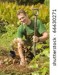 Happy mature man transplanting decorative plants and flowers in his sunny garden. - stock photo