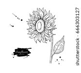 Sunflower Flower Vector Drawing....